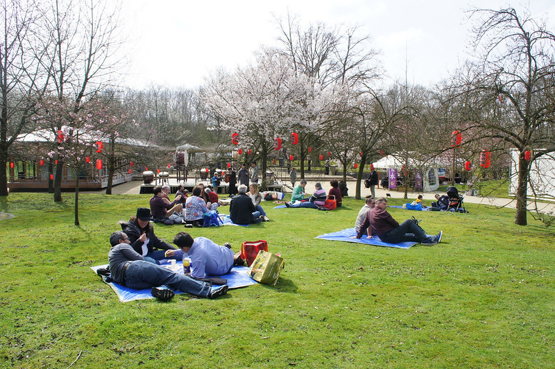 Photo: Hanami Picnic in the Japanese Garden of Hasselt